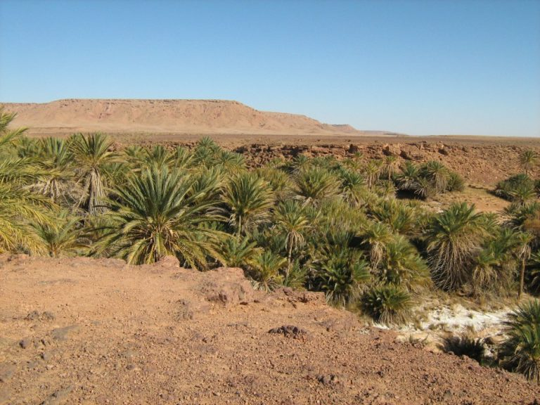 oasis de saf saf, uno de los más celebres de Marrueros.